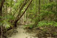 Fraser Island-1024_200